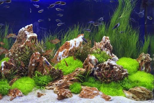 Preparaty do uzdatniania wody w akwarium