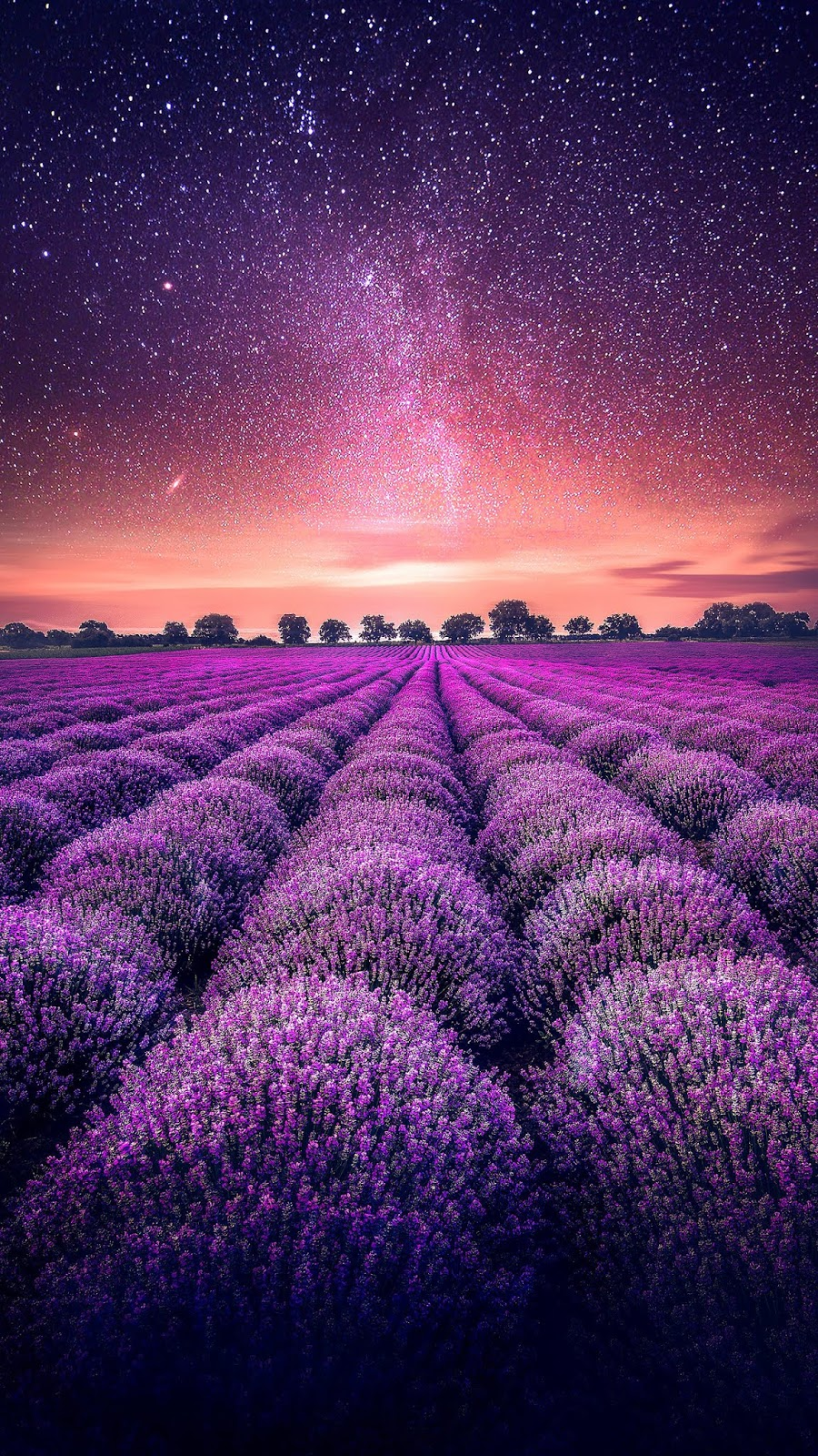 Lavenders field in the starry sky