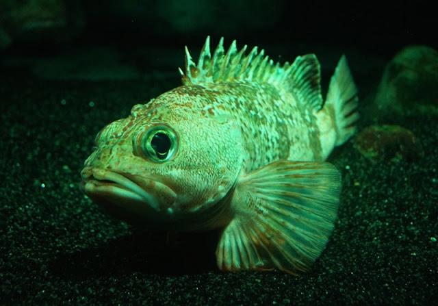 Das Nordsee-Ozeanarium in Hirtshals: Ein tolles Ausflugsziel für Familien in Nord-Jütland. Es ist das größte Aquarium in Nord-Europa und auch toll für Regentage.