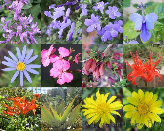 April garden flowers