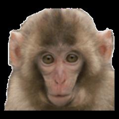 Animal photo English Sticker Everyday