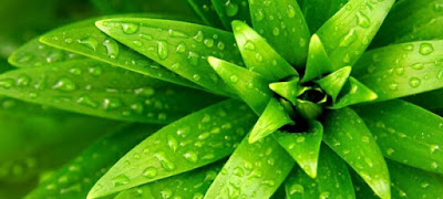 Plantas y biologia de los organismos