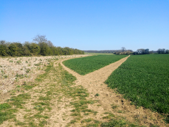 Keep left with the hedgerow on the left and the field on the right