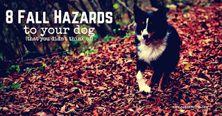fall hazards to dogs