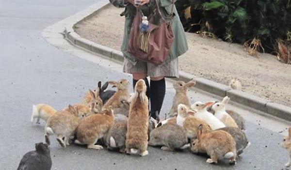 Tavşan Adası, Japonya