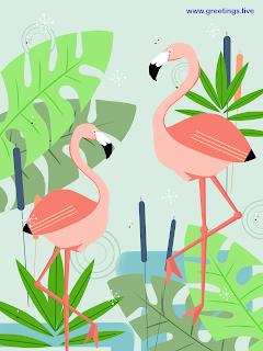 Free flamingo Birds Cartoon art images