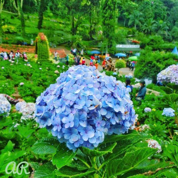 taman bunga, taman bunga selecta, wisata malang, tempat wisata kota malang, malang raya
