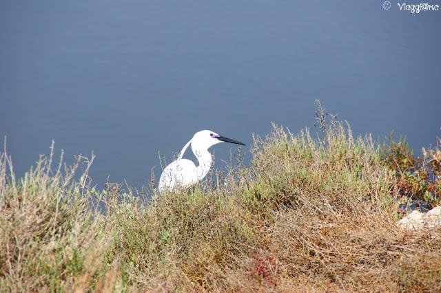 Uno tra i vari esemplari di uccelli della Camargue