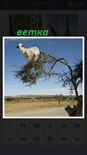 на ветке дерева стоит белая овца над дорогой