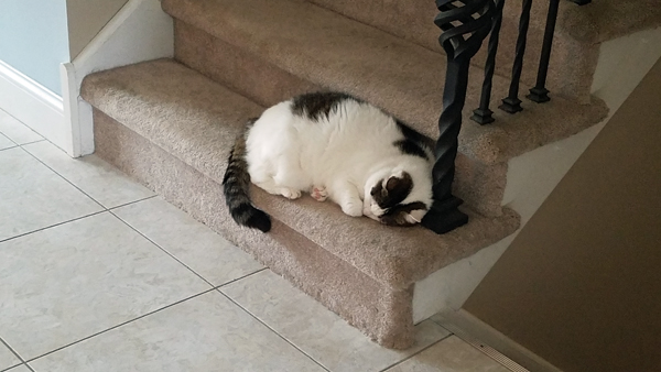 image of Olivia the White Farm Cat curled up asleep on the bottom stair