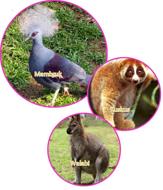 Walabi Kuskus Kanguru pohon,  Burung Cendrawasih, Musang berkantong,  Burung kakaktua berjambul merah. Burung Kasuari, Mambruk.