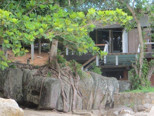 Корни дерева на проросли на камне
