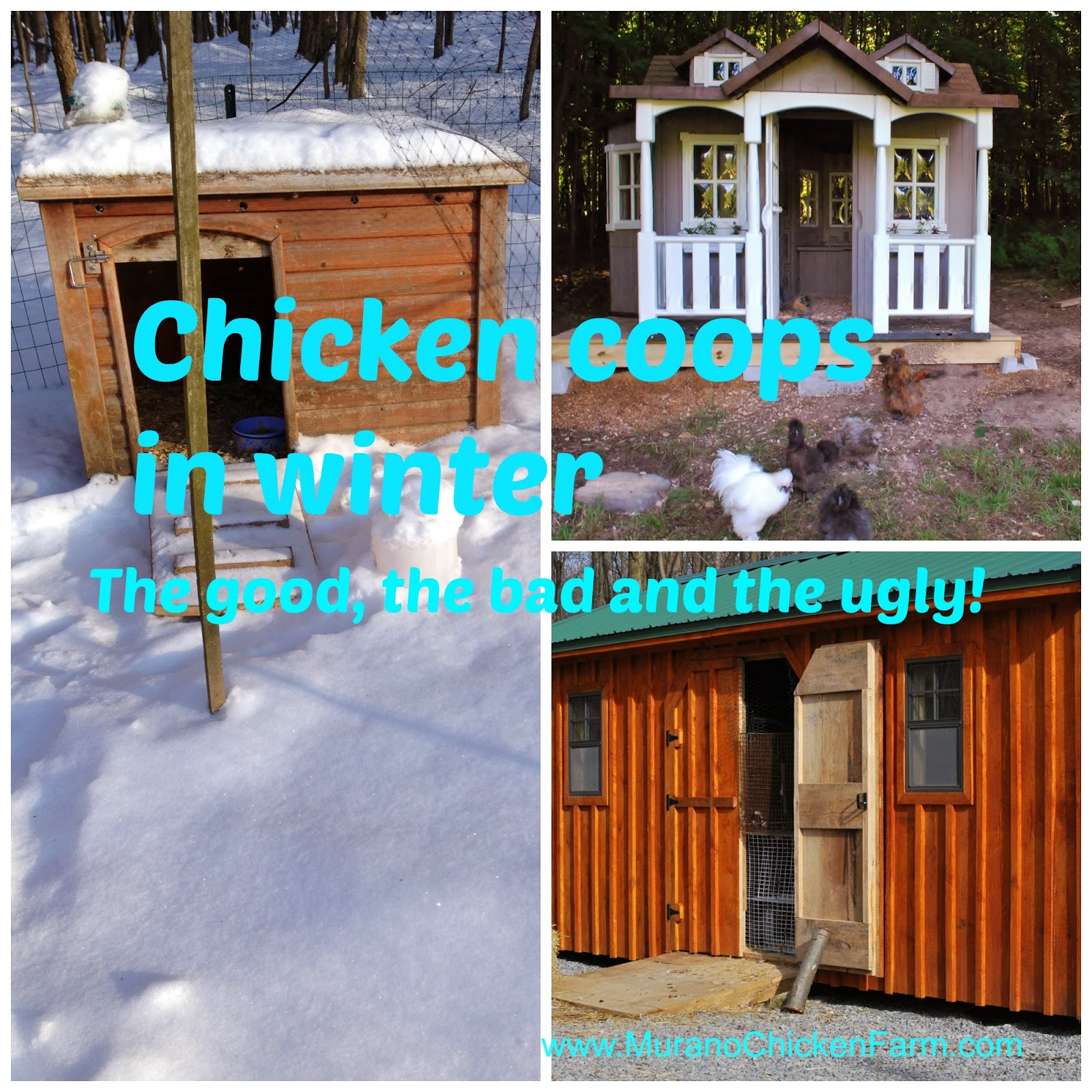 winter chicken coops