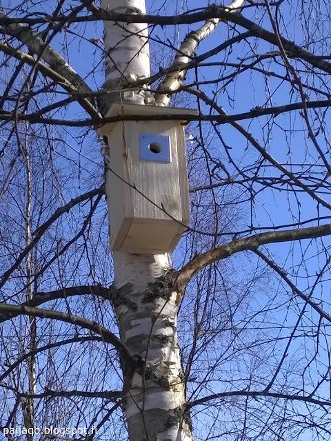 paiqo: linnunpönttö