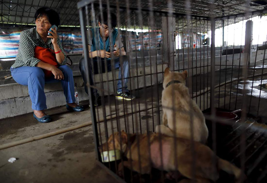 Here she sits next to a cage with poor dogs that she just bought from dog-meat dealers - Chinese Woman Travels 1,500 Miles And Pays $1,100 To Save 100 Dogs From Chinese Dog-Eating Festival
