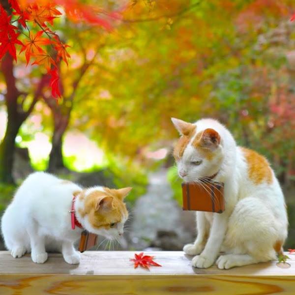Kucing di Jepang Punya Hari Perayaan Lho!