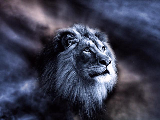 Sangar 30 Gambar Singa Lengkap Gambar Foto