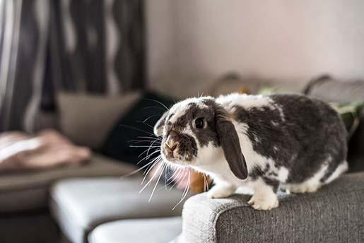 Co zrobić z królikiem w trakcie zimowych ferii?