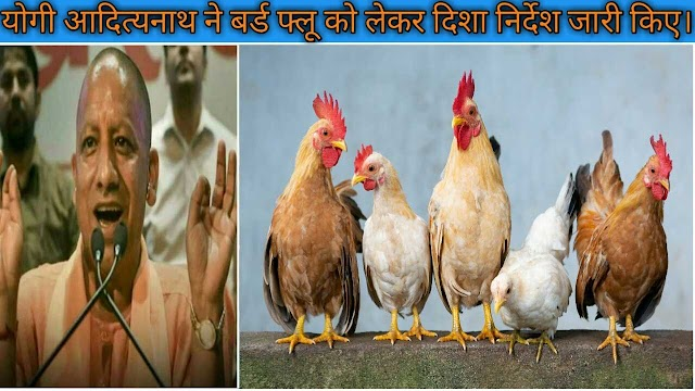 Uttar pradesh bird flu news in hindi | श्री योगी आदित्यनाथ जी ने बर्ड फ्लू को लेकर खास दिशा निर्देश जारी किए।