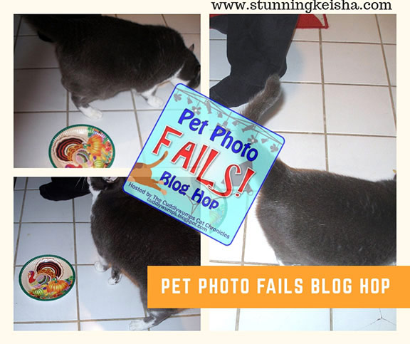 4 Pet Photo Fails to Make You Laugh