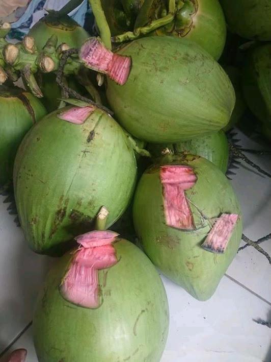 bibit kelapa hijau asli kelapa wulung Sumatra Utara
