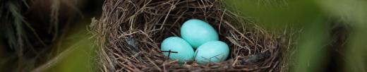https://nuestropandiario.org/2020/07/07/los-huevos-y-la-oracion