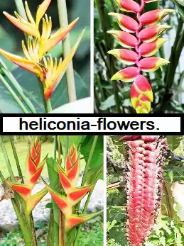 Heliconia crop protection