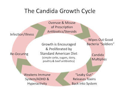 Everything Plexus: All About Candida Yeast
