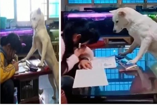 छोटी बच्ची का होम वर्क करवाता है यह कुत्ता, वीडियो देखकर हैरान हो जाएंगे