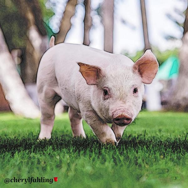 🐷 Pig 🐖