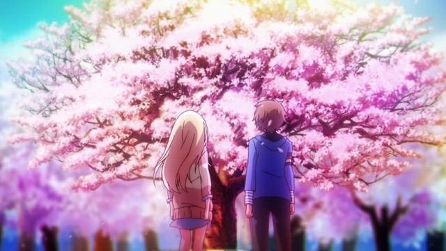 Sakurasou No Pet Na Kanojo Cherry Blossom
