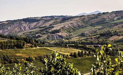 Romagna vini