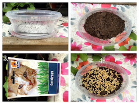 How to Grow Cat Grass at BBHQ ©BionicBasil® Craft-Fest Day 5