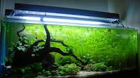 Cara Memilih Lampu Aquascape yang Tepat untuk Pertumbuhan Tanaman Air