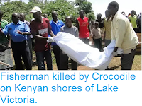 https://sciencythoughts.blogspot.com/2019/02/fisherman-killed-by-crocodile-on-kenyan.html