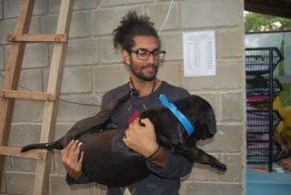 Campanha de castração de novembro do GPA castrou, com sucesso, 77 cães e gatos