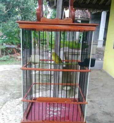 ガコール・ブクパル・タメに鳥のプレチの世話