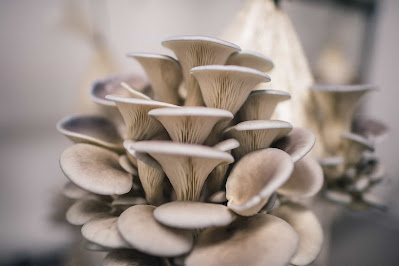 Mushroom cultivation training session