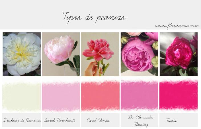 peon as parte 3 tipos de peon as en la floripedia floritismo. Black Bedroom Furniture Sets. Home Design Ideas