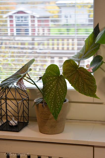 olohuone vaalea sisustus olohuoneen sisustus huonekasvit enkelinsiipi viherkasvit