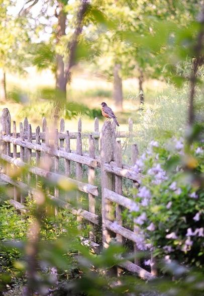Bird in the yard