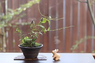 草もの盆栽 作品例 ギンミズヒキ リンドウ他
