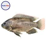 Ikan Mujair 500 Gram