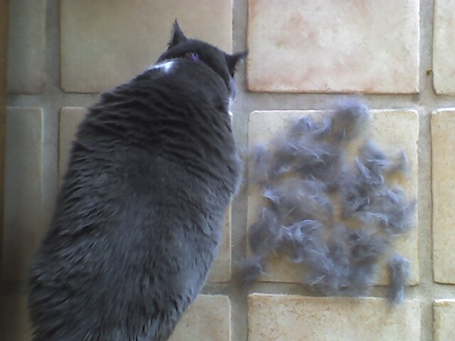 When is shedding season for dogs and cats?