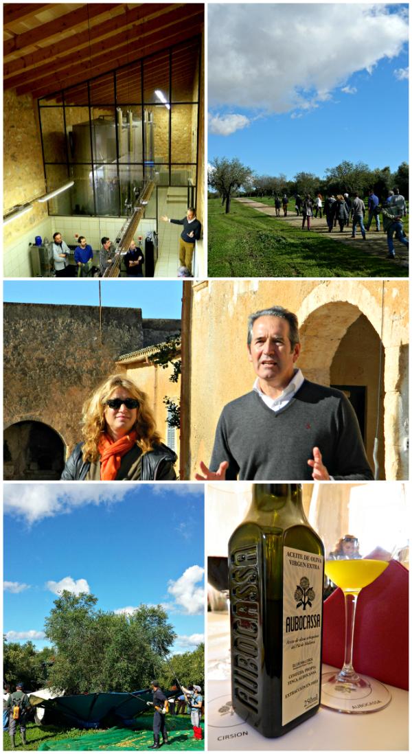 Bombones de Aceite de Oliva, Visita y cata Aubocassa AOVE con DO Mallorca, Agustín Santolaya, Bodegas Roda, Bodegas La Horra