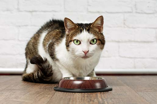 Fitmin Purity – holistyczna karma dla kota