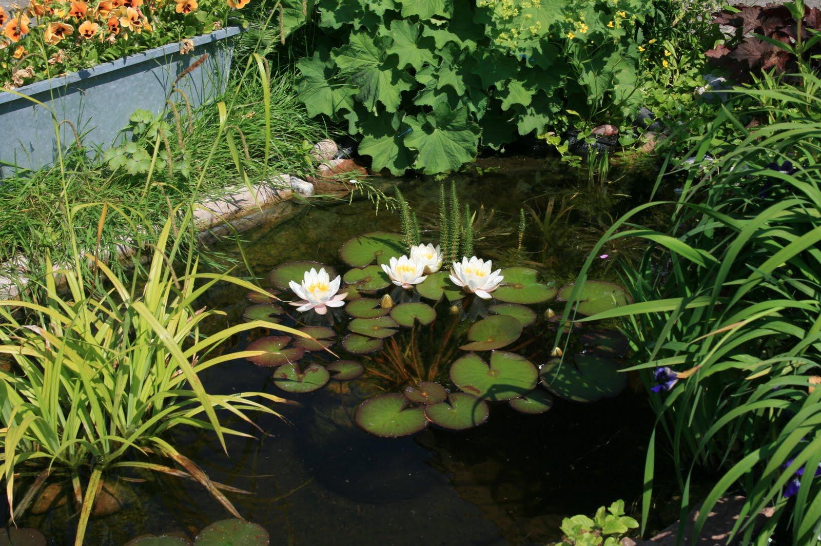 åkande ligne planter