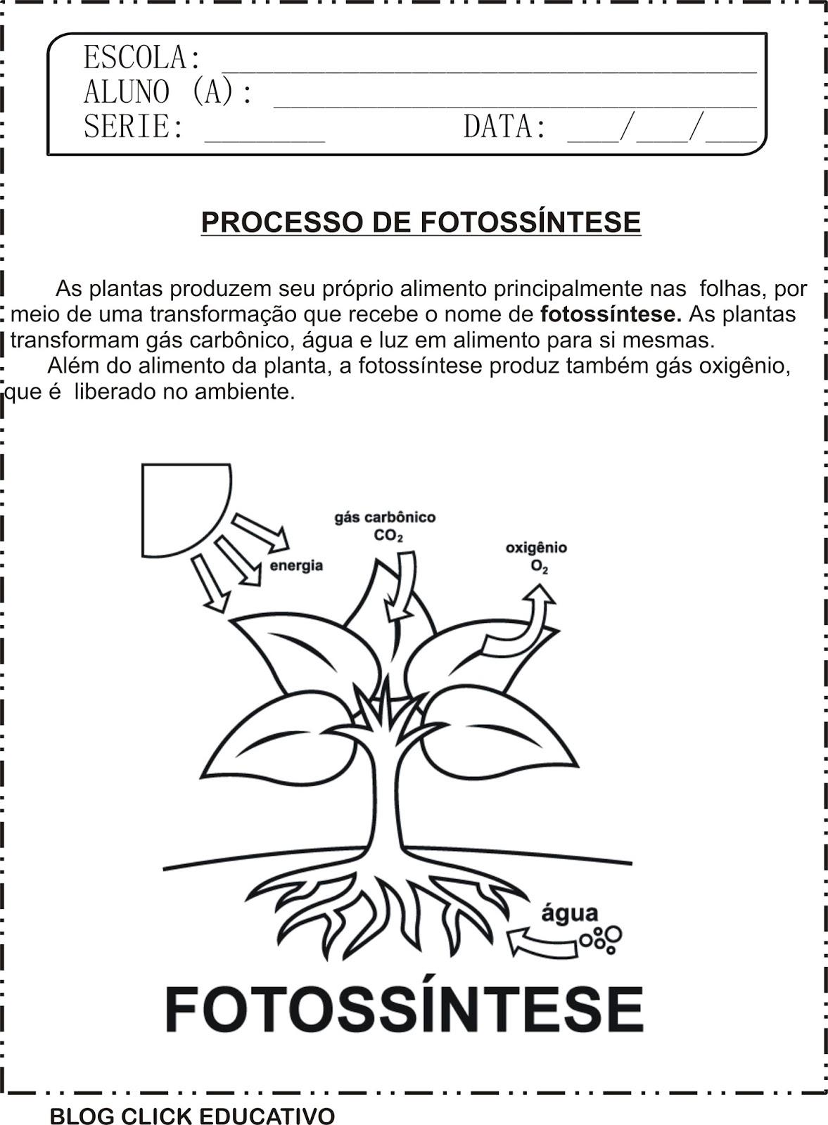 Atividade De Ciências Processo De Fotossíntese Para