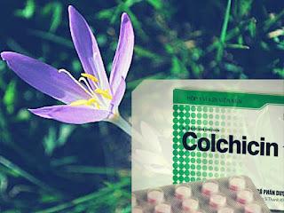 Colchicin đang được kỳ vọng chống lại được Covid-19