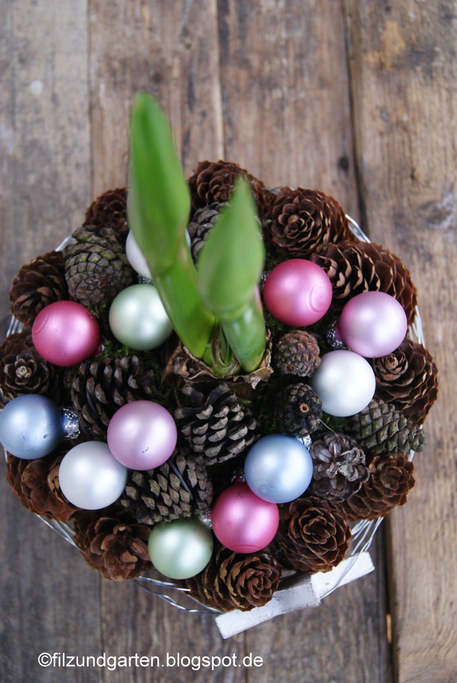 Amaryllis mit Zapfen ummantelt und Weihnachtskugeln dekoriert